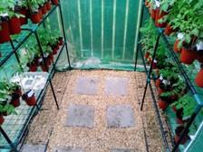 Pea gravel and pavers in greenhuse